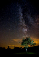 FINAL-A3-Pommier-Milky-Way-IMG_1066
