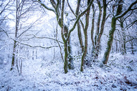 Anibas-Photography-photos-Normandie-sous-la-neige-5670
