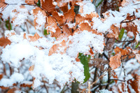 Anibas-Photography-photos-Normandie-sous-la-neige-5660