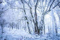 Anibas-Photography-photos-Normandie-sous-la-neige-5673