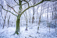 Anibas-Photography-photos-Normandie-sous-la-neige-5672