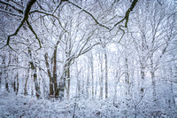 Anibas-Photography-photos-Normandie-sous-la-neige-5689