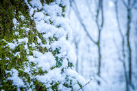 Anibas-Photography-photos-Normandie-sous-la-neige-5676