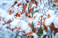 Anibas-Photography-photos-Normandie-sous-la-neige-5657