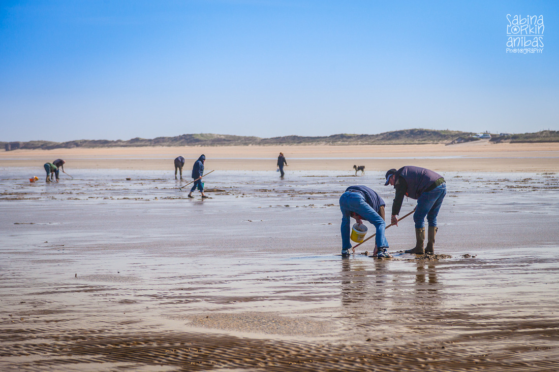 Photographer in Normandy - Discover my photos of Utah Beach at low tide - Cockle picking and oyster beds.