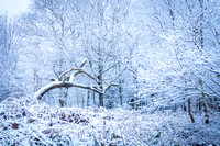 Anibas-Photography-photos-Normandie-sous-la-neige-5662